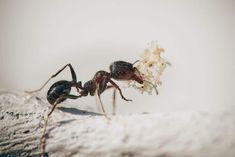 Types Of Moths, Types Of Insects, Pantry Moths, Ant Species, Queen Ant, Ant Colony, Get Rid Of Ants, Nature Images, Bugs