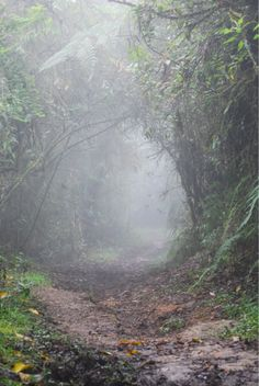path into the misty woods