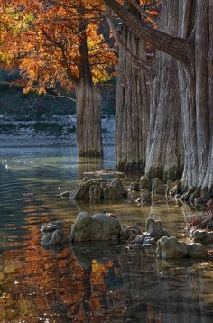 trees red autumn leaves & knees in the water