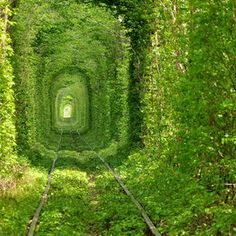 """The Tunnel of Love"". This got to be one of the most beautiful train tunnels in the world and can be found near the town of Klevan, 25 km NW of the city of Rivne, in Ukraine. During summer, the trees form a dense green tunnel along one kilometer long section of the railway."