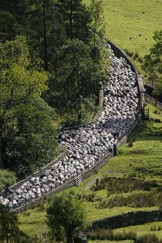 Probably the only traffic jam we'll encounter. Field change for sheep.