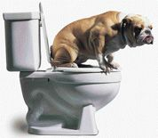 New Hampshire Dog Pooper Scooper Great #dog pic