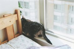 adorable cat alone