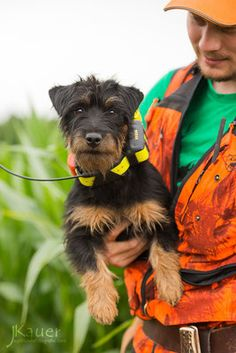 Terrier Breeds, Dog Breeds, Welsh Terrier, Dog Hoodie, Hunting Dogs, Clips, Dog Coats, Working Dogs, Dog Harness