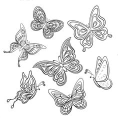 Colors of Nature Adult Colouring Book - Butterflies
