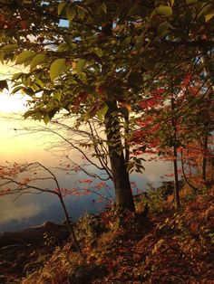 """Telecall """"Journey of the Vision Tree"""" Fall Foliage Retreat Women's Weekend (Non Refundable) Registration Now Open"""