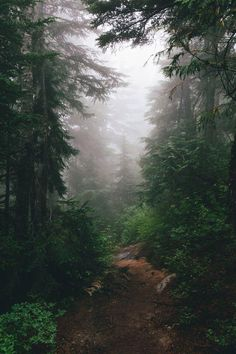 Let's go on a forest walk together