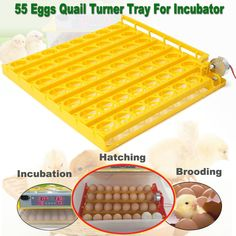 55 Eggs Quail Turner Tray For Incubator 110V AC Motor Chicken Incubation Tools Equipment Supplies Poultry Incubator Accessories
