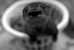 What's up?~♛ Baby otter!!