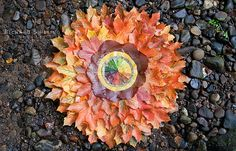 Autumn Fire Colour Wheel