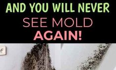 Mold in the house is extremely unpleasant and dangerous issue, as it endangers health in Tea Tree Oil Uses, Alkalize Your Body, Cleaning Mold, Natural Cures, Natural Healing, Lose 40 Pounds, Types Of Cancers, Lose Body Fat, Medicinal Plants