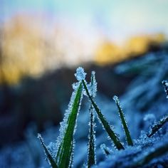 Frost on grass by Duobla_m