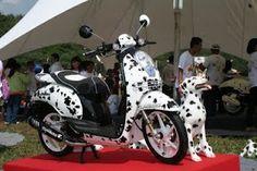 Dalmatian Theme