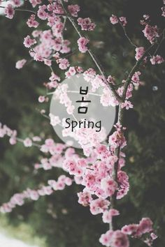 healthy living quotes motivational messages without women Wallpaper Iphone Cute, Wallpaper Quotes, Cute Wallpapers, Wallpaper Backgrounds, Korean Words Learning, Korean Language Learning, Korea Quotes, Korea Wallpaper, Learn Hangul