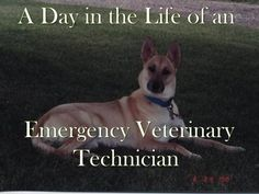 A Day in the Life of an Emergency Veterinary Technician. I love how accurate this is....only difference is that i work the night shift.