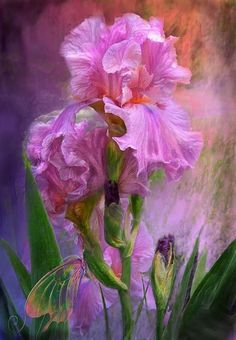 rose and rose again no no rose .. this is an iris a bearded iris...most ofter in shades of purple...signed MoM