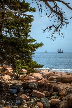 24 Reasons Everyone Should See Maine Before They Die---The Wonderland Trail in Acadia National Park California Beach Camping, Camping In Maine, Travel Maine, Arcadia National Park, National Parks, Rhode Island, Vermont, Connecticut, Massachusetts