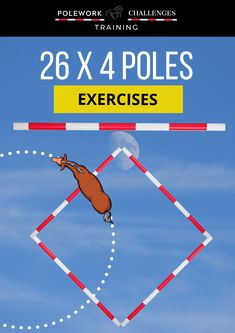 Is your horse bored going around in circles? Download 110+ unique pole work exercises to improve your horse's suppleness, balance, rhythm, strength and flexibility....We share natural horsemanship training, care & riding. Enjoy quotes, patterns & liberty training, polework exercises for horses, lateral work & moves, dressage, lateral movement and workouts. Get horse riding videos, quotes & horse training tips, fun ground work exercises for horses & schedules for beginners. Horse Riding Tips, Horse Riding Clothes, Workout At Work, Workout Warm Up, Work Exercises, Fun Workouts, Horse Training, Training Tips, Ground Work For Horses