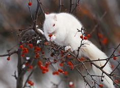 Amazing albino squirrel with red eyes. Adorable Isn't..?(16) Facebook