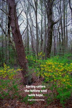 """soulful spring quote with a yellow and green blossoming forest.""""Spring colors the hollow soul with hope. Free Soul Quotes, Broken Soul Quotes, Peace Quotes, Hope Quotes, Nature Quotes, Spring Quotes Flowers, Flower Quotes, Winter Quotes, Summer Quotes"""