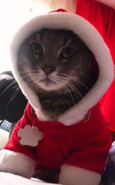 My cat Melis at Christmas