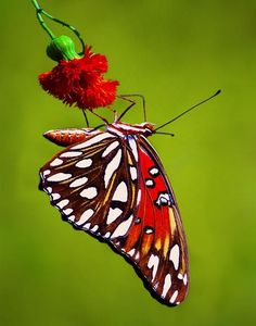 Butterfly by Sinh Ng