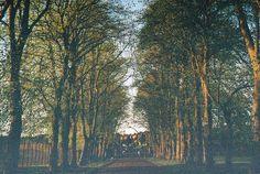Tree-lined Avenue, Victoria Park, Glasgow by Douglas Herbert, via Flickr
