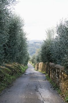 road between the olive groves, Lastra a Signa, Florence, Italy