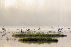 Birds in the morning lake