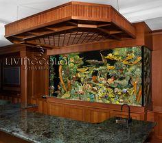 custom aquariums - Bing Images