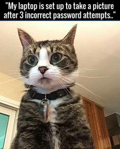 Hacker Cat Strikes!