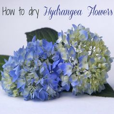 I also love dried flowers and hydrangeas make great ones. Hydrangeas are one of those flowers that almost dry themselves.