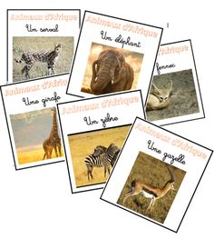 Vocabulaire: animaux africains