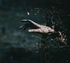 Skydancer Book II: Veil of Thorns // Bri ventures through an enchanted forest…