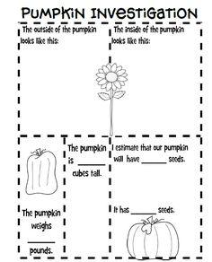 Fun For First: Pumpkin Investigation