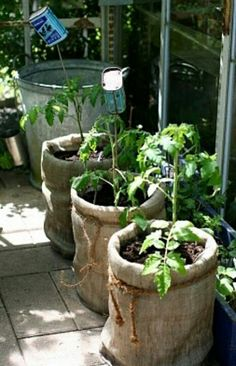 5 gal buckets with burlap over them. Awesome!