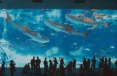 7 Most Amazing and Breathtaking Aquariums Around The World