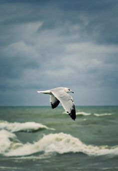 Listening to the sounds of seagulls....