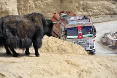 Truck and Yak