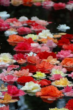 Beautiful floating flowers