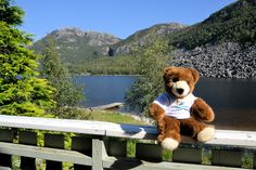 Der Urlaubär fühlt sich im Ferienhaus in Norwegen wohl!