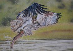 Giclee Print, Art Print, Birds Of Prey, Tuxedo, Wildlife, Range, Etsy Shop, Fish, The Originals