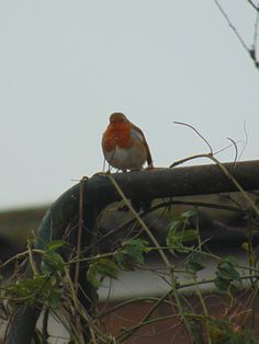 """From Jim Radford: """"This picture of an ol' Robin was taken on Boxing Day. We watched him from the living room with a coffee whilst regaining our composure from a hectic Christmas Day....it was very peaceful."""" #ViewFromYourHome #competition"""