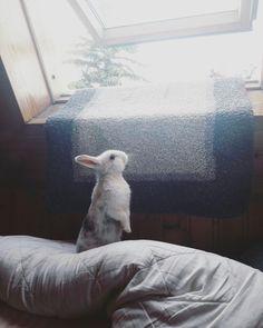Cookie Cute bunny