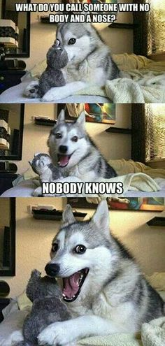 Husky funny