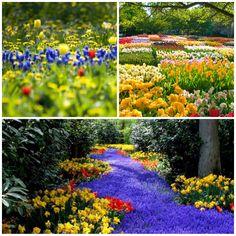 Daqui Dali» Arquivo do Blog » Bem vinda, Primavera