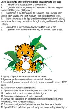 Facts about tigers for kids http://firstchildhoodeducation.blogspot.com/2013/08/facts-about-tigers-for-kids.html