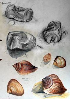 Sketchbook Drawing example of a gcse art sketchbook exploring shells - This collection of International GCSE Art sketchbook examples was created to inspire the students of an experienced art teacher and Coursework assessor. Natural Forms Gcse, Natural Form Art, Sea Life Art, Sea Art, Arte Gcse, Gcse Art Sketchbook, Sketchbooks, Sketching, Art Alevel