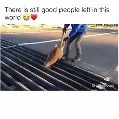 There is still food people left in this world Good people with good hearts saving animals Respect Cute Funny Animals, Cute Baby Animals, Funny Cute, Animals And Pets, Vida Animal, Short Dog, Faith In Humanity Restored, Cute Stories, Animal Memes