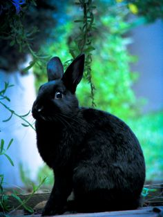 Follow me... (The bunny was considered a guide to the Triple Goddess in the Earth.)